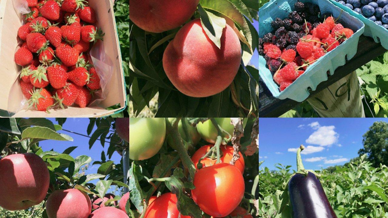 纽约附近的夏季水果采摘 A family experience