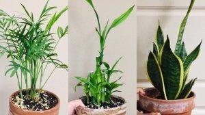 记室内植物入坑半年 | 绿植篇-北美省钱快报攻略