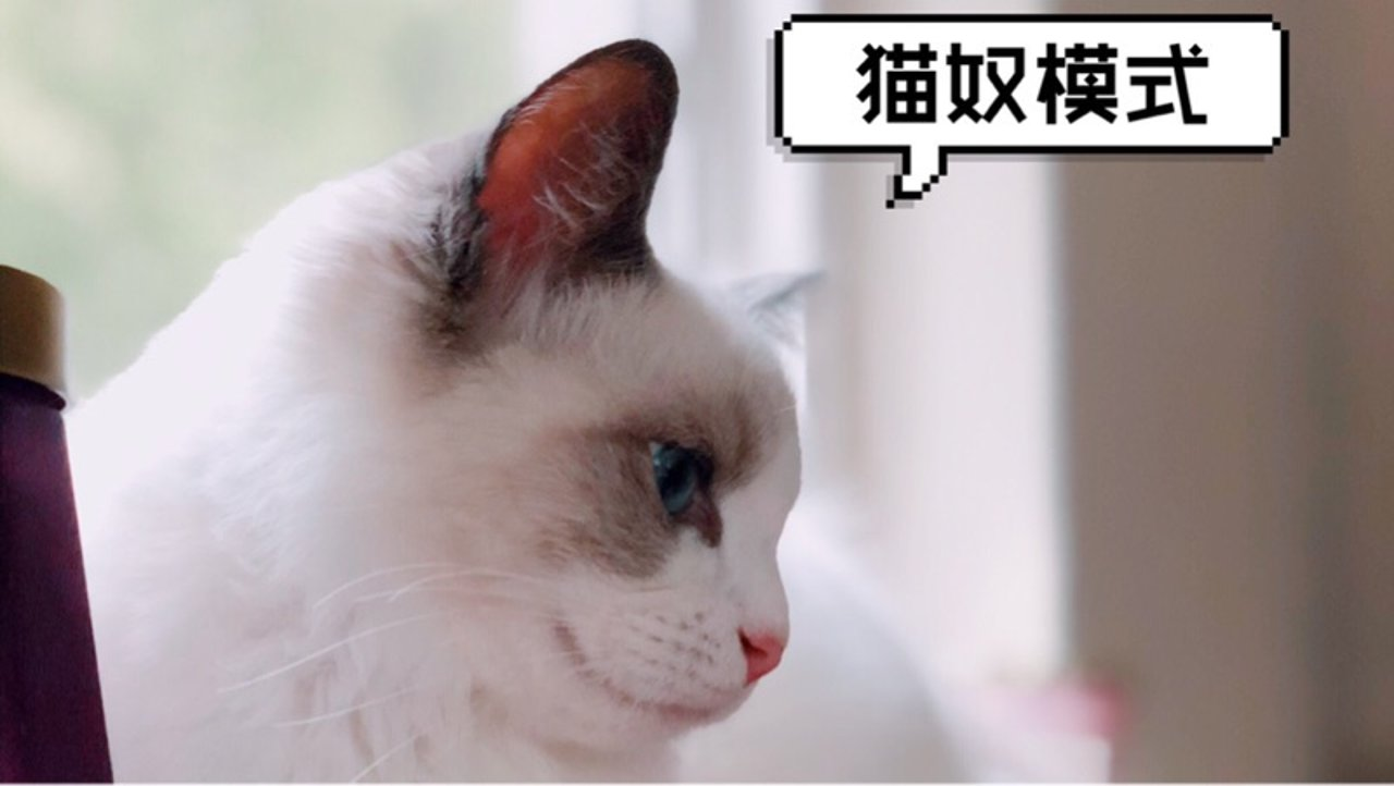 话痨猫奴🐱日记💘超详细北美养猫过程