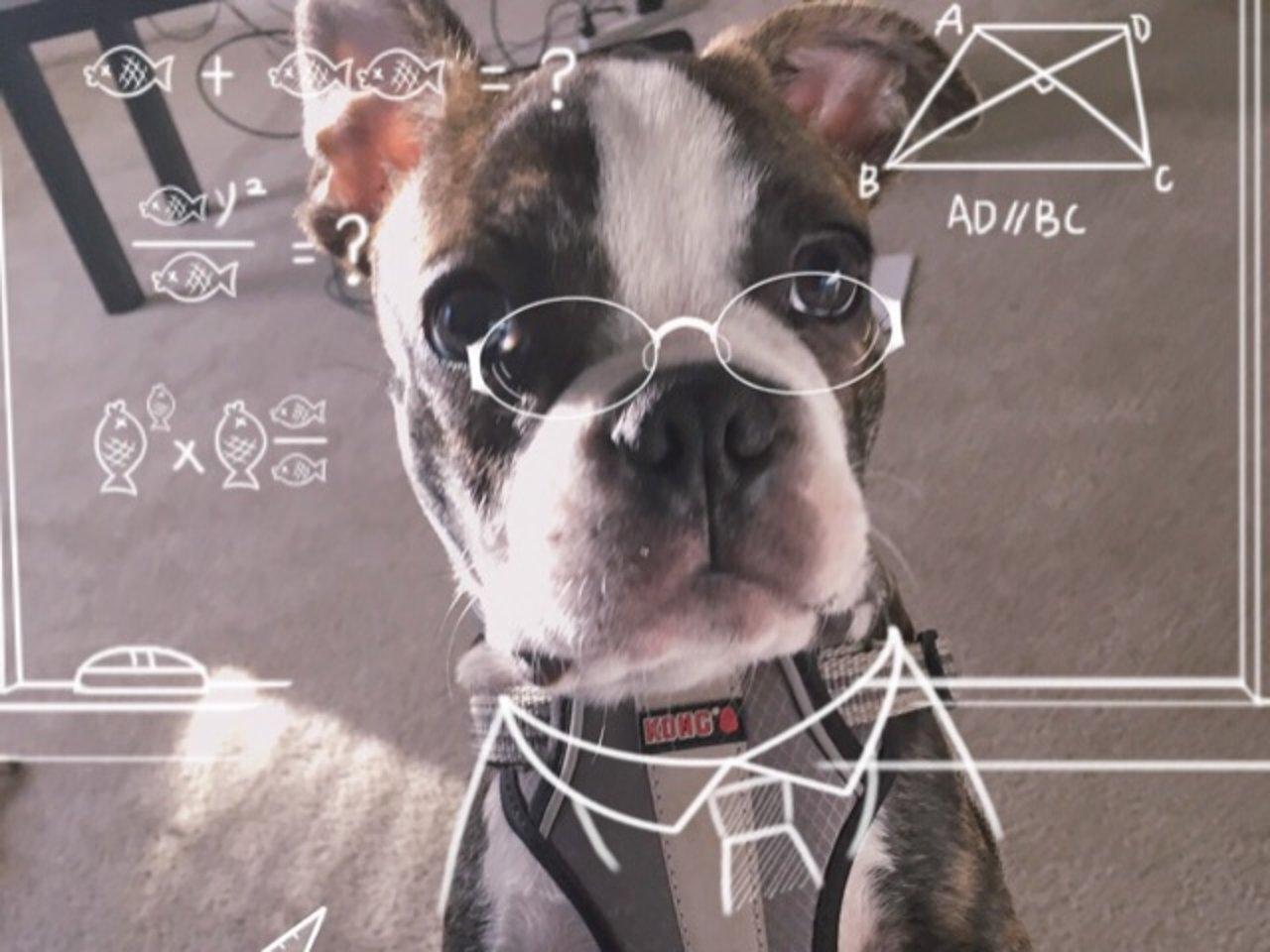 毛小孩课堂:教狗狗学会听指令