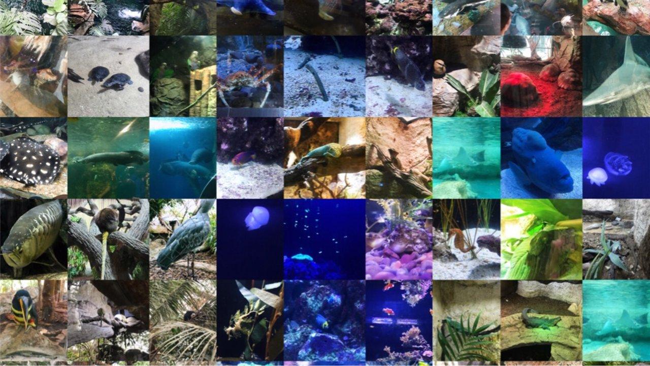 达拉斯世界水族馆参观攻略