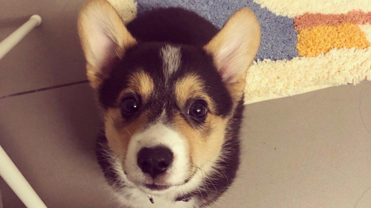 爱宠用品集合|新晋狗妈经验分享之养狗初期好物推荐