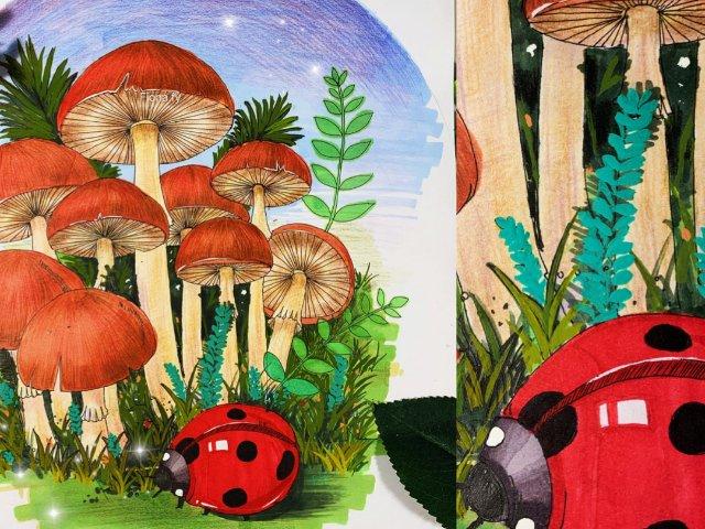 原创马克笔&水彩插画教程|🍄🍄蘑菇...