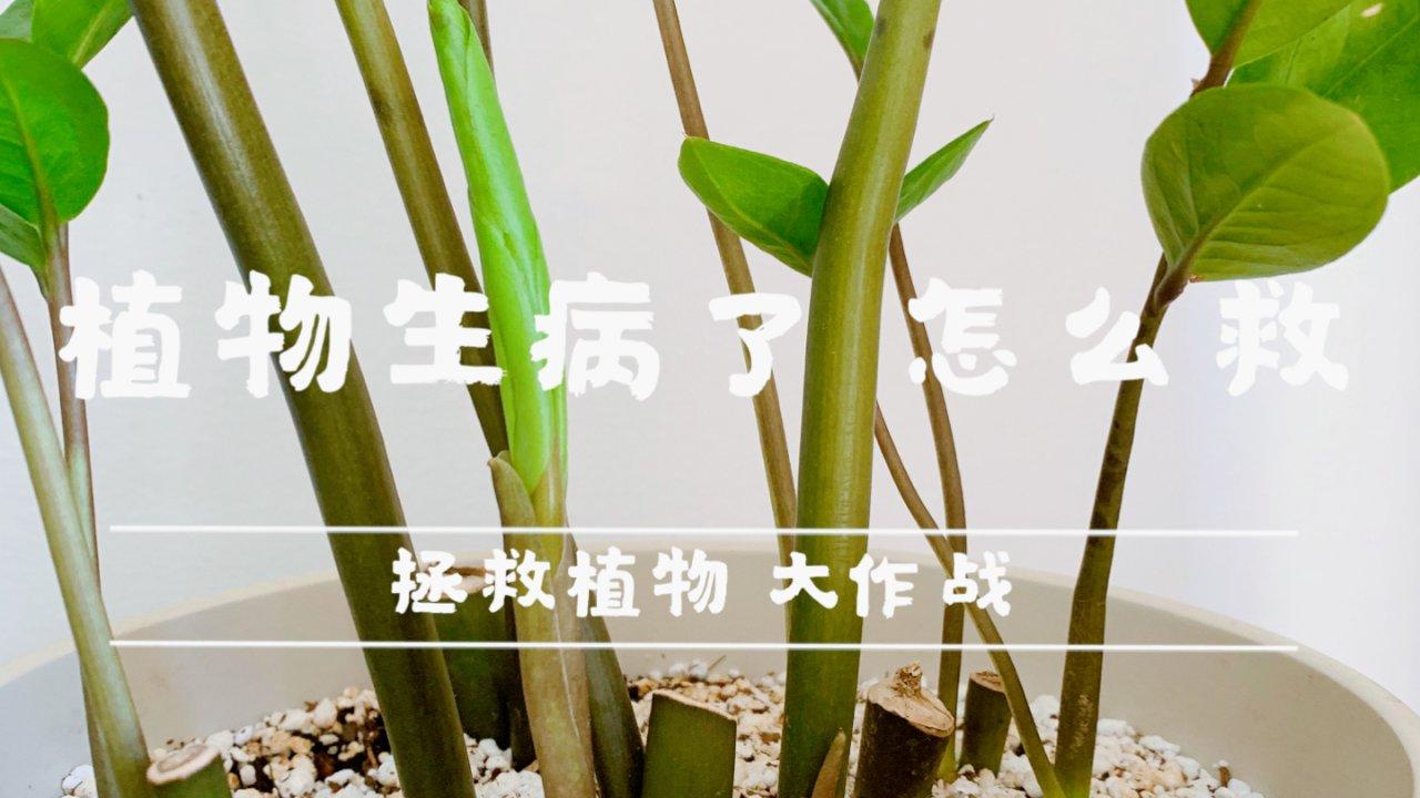 【拯救植物】大作战【1】—土壤发霉