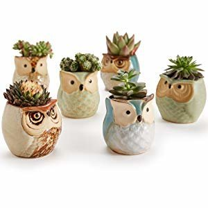 Amazon.com: Sun-E 2.5 Inch Owl Pot Ceramic Flowing Glaze Base Serial Set Succulent Plant Pot Cactus Plant Pot Flower Pot Container Planter Bonsai Pots with A Hole Perfect Gift Idea 6 in Set: Garden & Outdoor