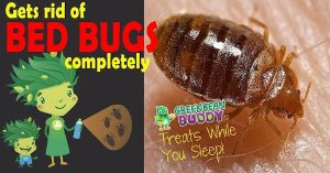 Bedbug Trap - The Williams Method - YouTube