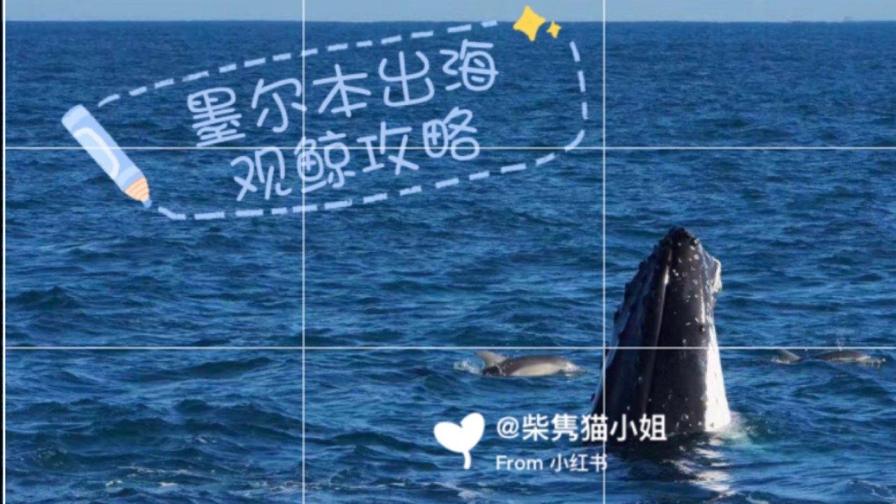 墨尔本玩什么|出海观鲸🐋近距离看到座头鲸!