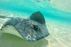 Grand Cayman Stingray City, Coral Gardens Swim and Snorkel 2020 - Cayman Islands