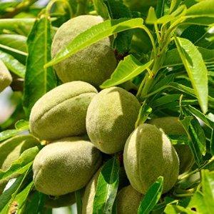 Almond Supple Skin Oil | Natural Skin Care | L'Occitane