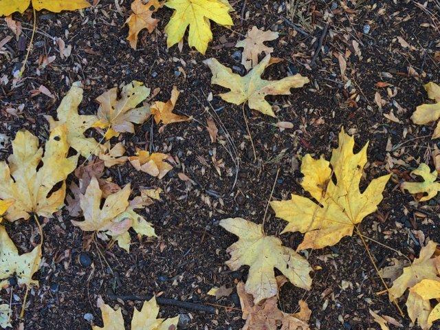 沒有紅葉🍁的秋天不是秋天,Yose...