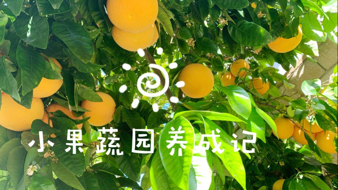 【小果蔬园】有苗不愁长_种植so easy(肥料推荐)