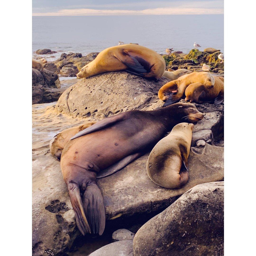 竟然可以如此之近的看海豹