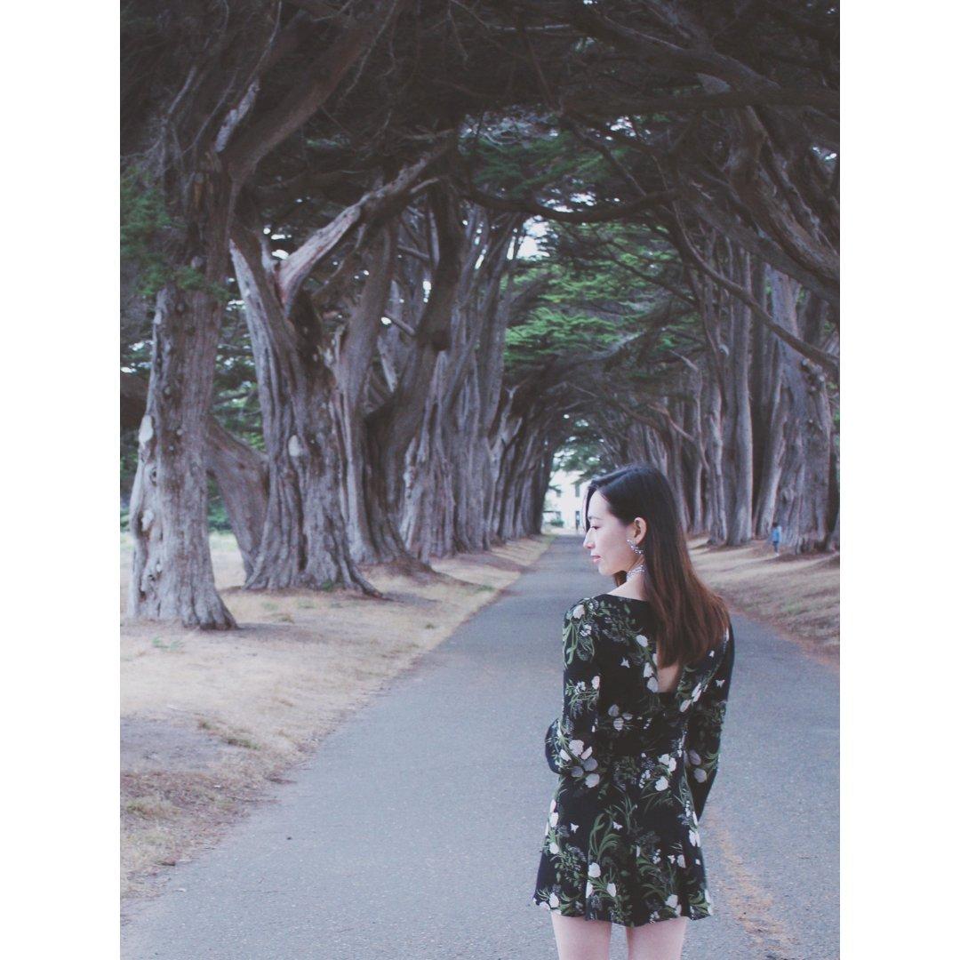 夏日·绿荫Cypress tree...