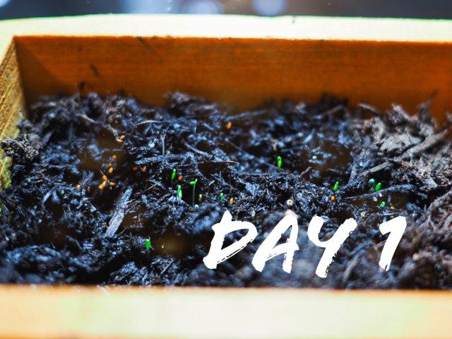 绿植生长记录•多肉篇:出芽生根🌱