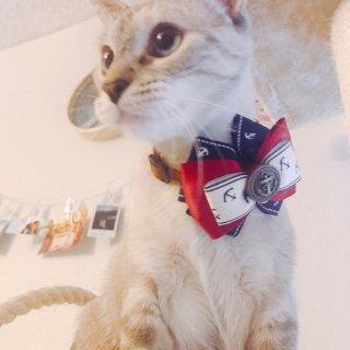 胡歌同款猫铃铛试戴...