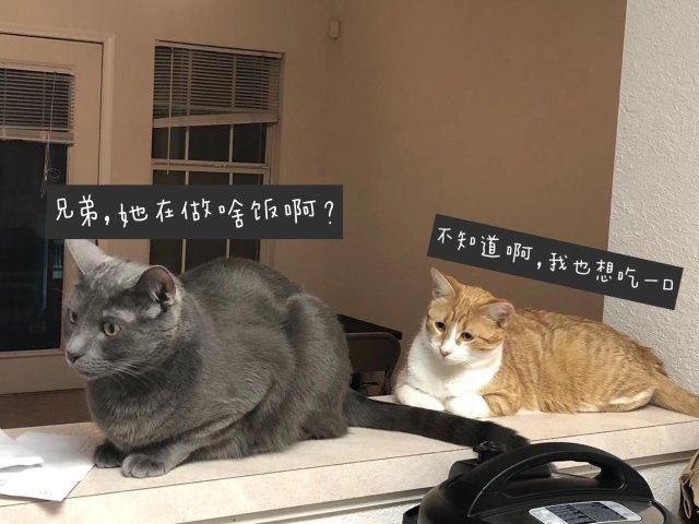 家里有三只猫主子的日常
