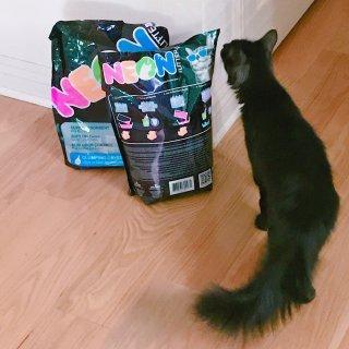 給貓寶寶的五彩貓砂體驗-Neon Litter