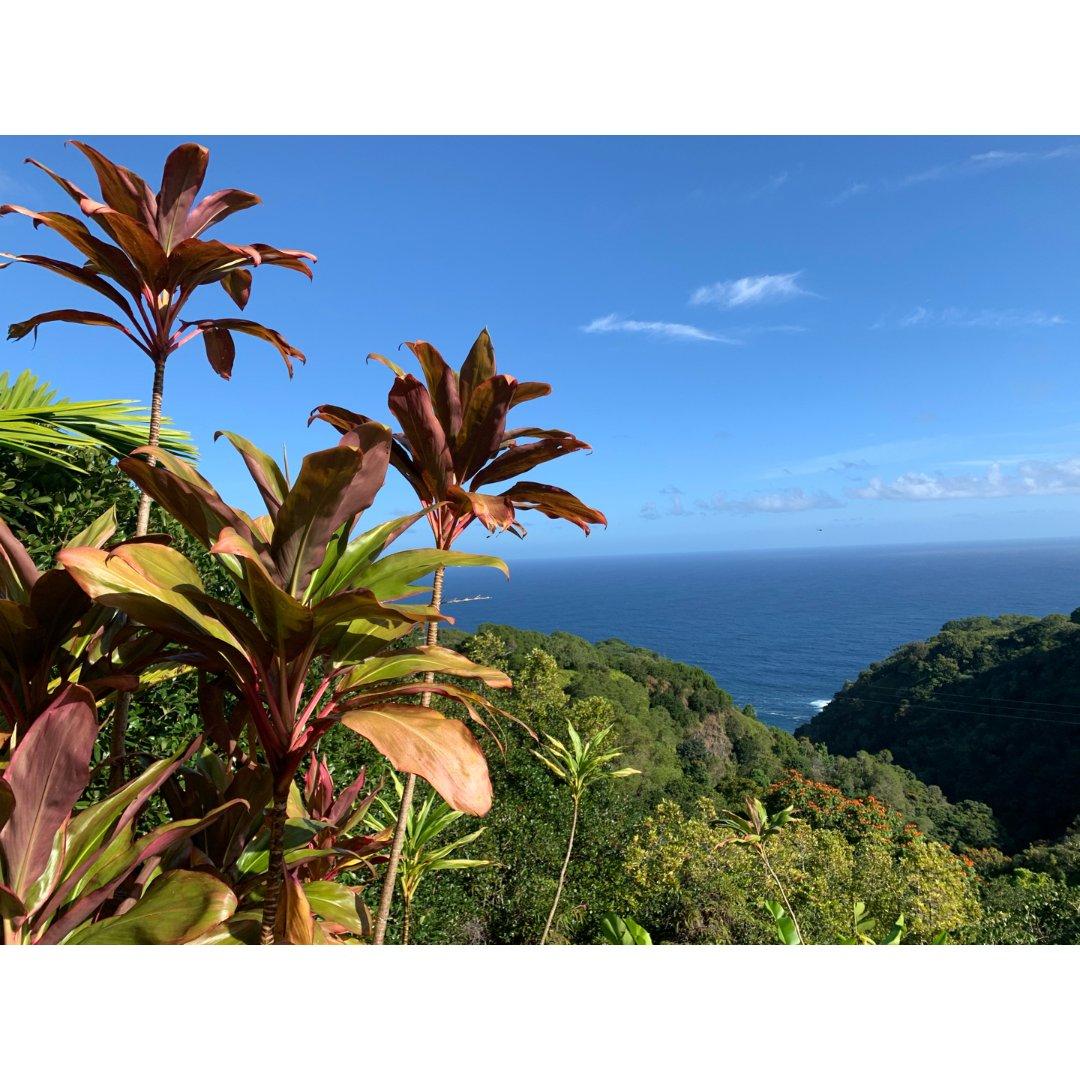 夏威夷Maui岛深度游 哈纳之路