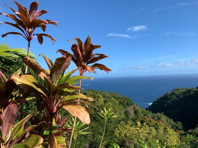 夏威夷Maui岛深度游|哈纳之路