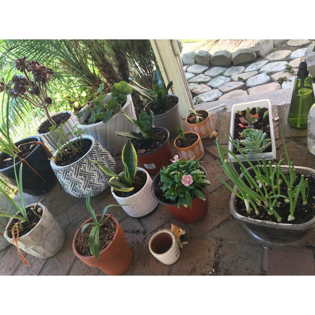 一起摆摊16-植物
