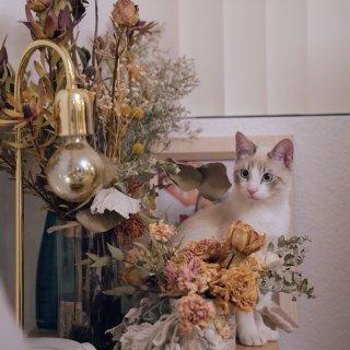 如何在家中拍出有质感的猫(照)片...
