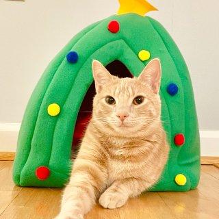 圣诞树猫窝🎄