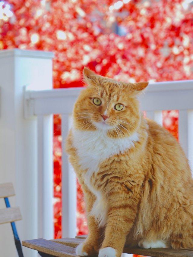 猫咪也来赏秋了
