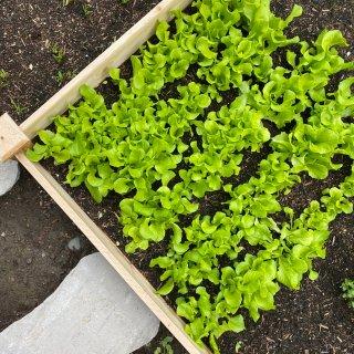 开启在家种地模式!吃过自家的菜,超市的菜...