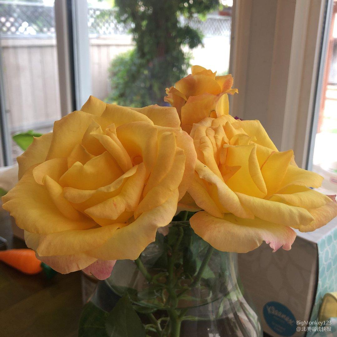 摆摊10|黄玫瑰