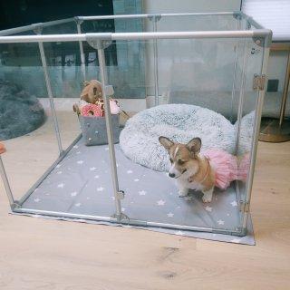 给爱犬一个现代感十足的透明小屋...