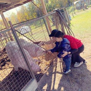 多伦多周边   南瓜农场🎃一起来喂猪啊哈...