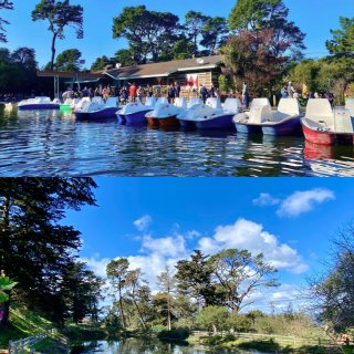 旧金山湾区 金门公园最喜欢的遛娃点 租船...