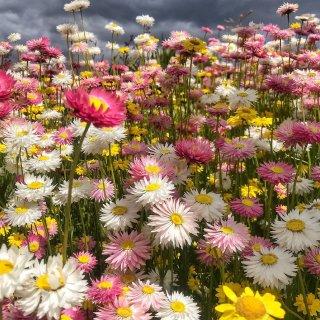 悉尼周边游-花展 Botanic Gar...