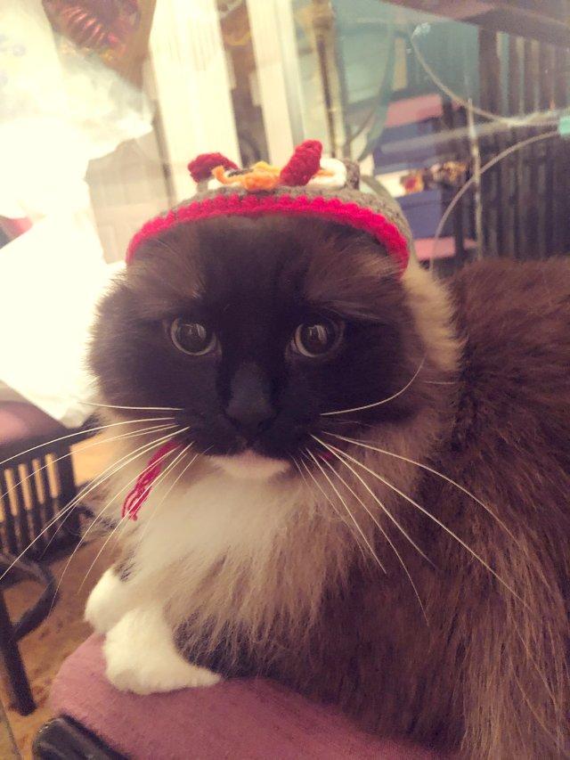 戴帽子的喵