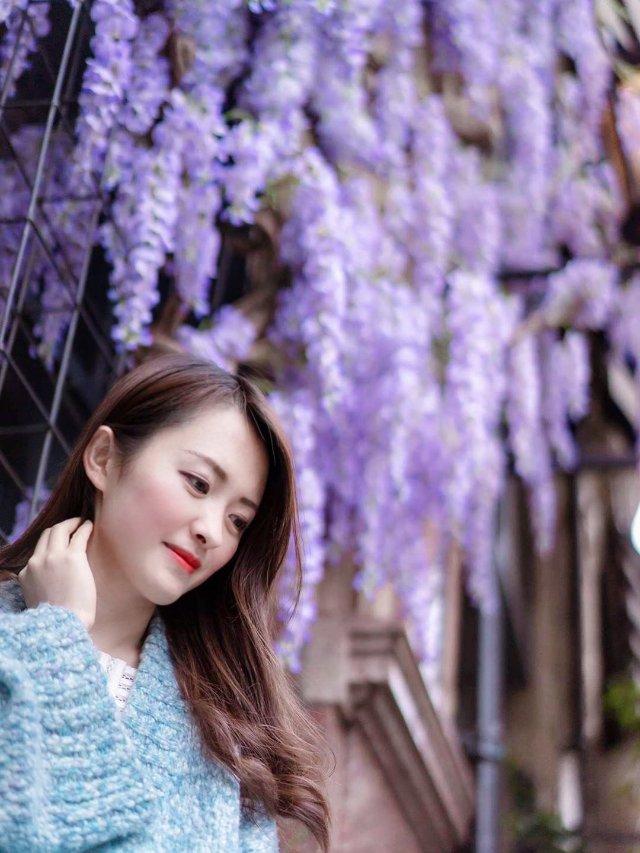 💜 紫藤花下的曼彻斯特,曼城摄影师专拍
