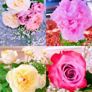 被鲜花治愈的每一天💐...