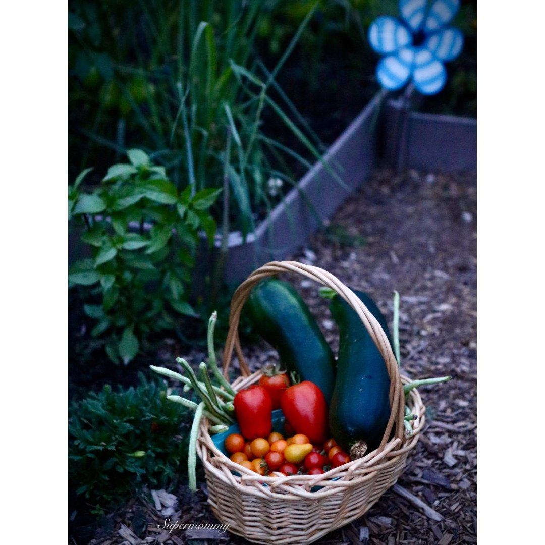 ❤️简单的幸福/每天后院一篮菜❤️