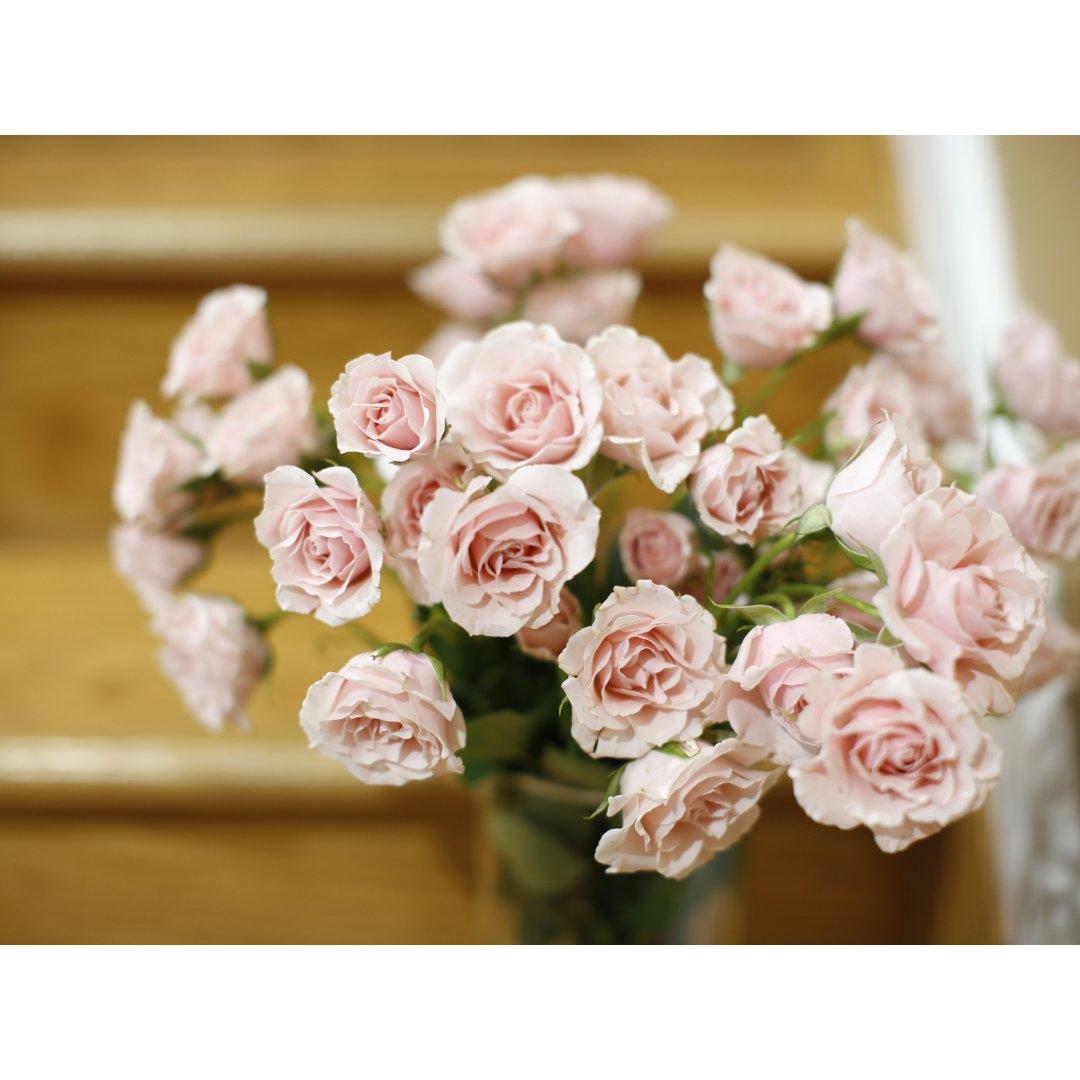 拥有粉色玫瑰的感恩节