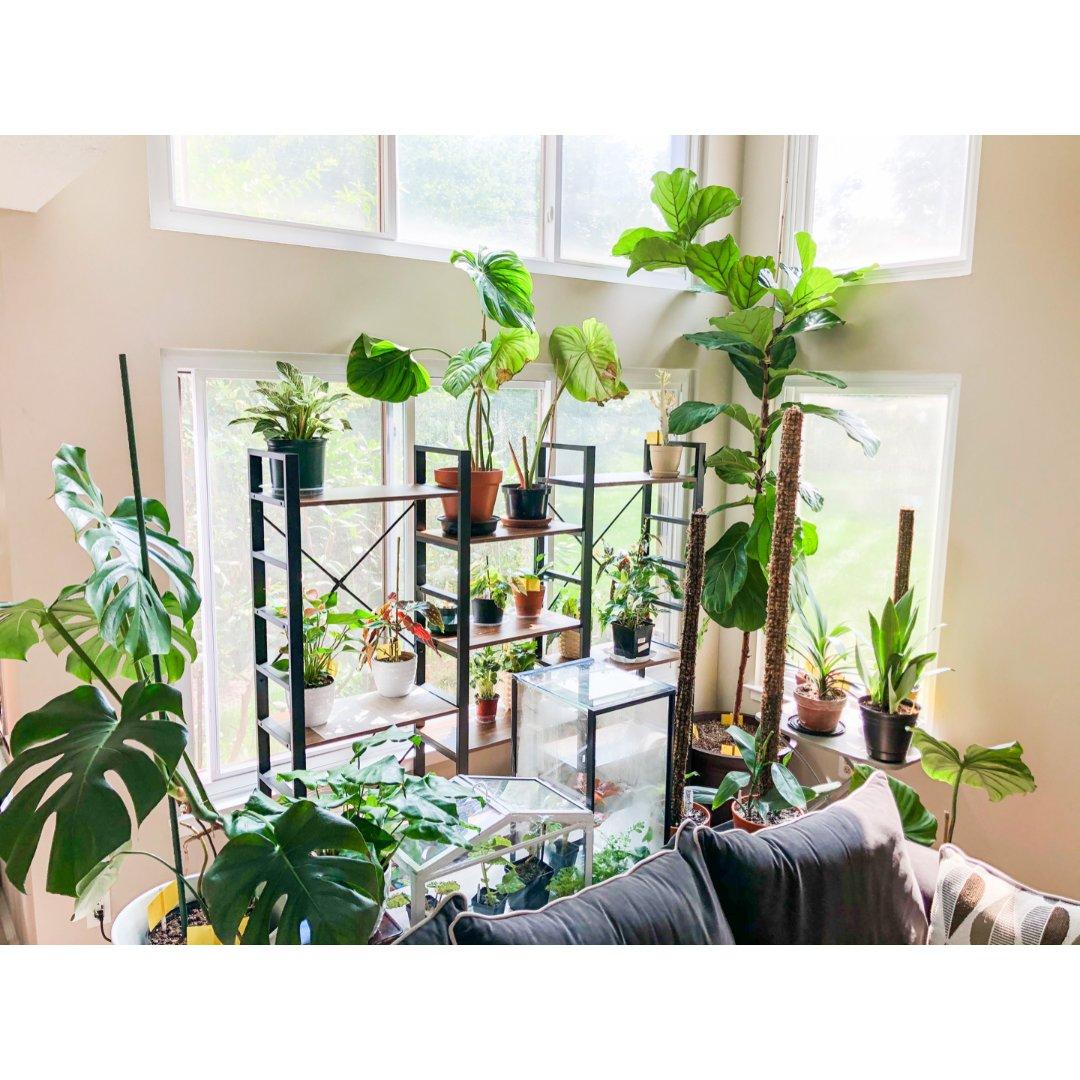 我的植物哪里买(线下)🌱绿植满屋系...
