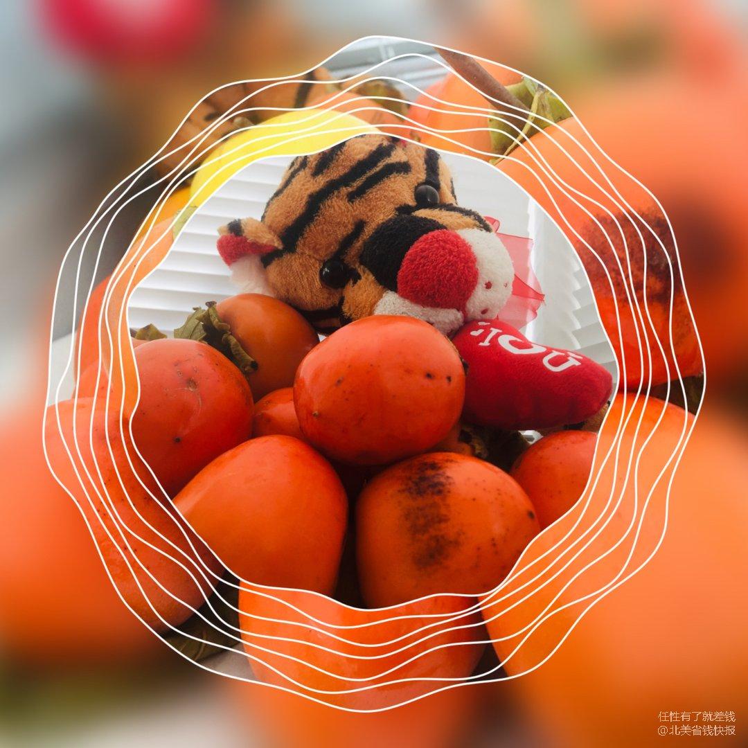 【黑五3-3】华丽丽的柿子季节又到啦