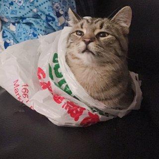 听说在DM买东西送猫