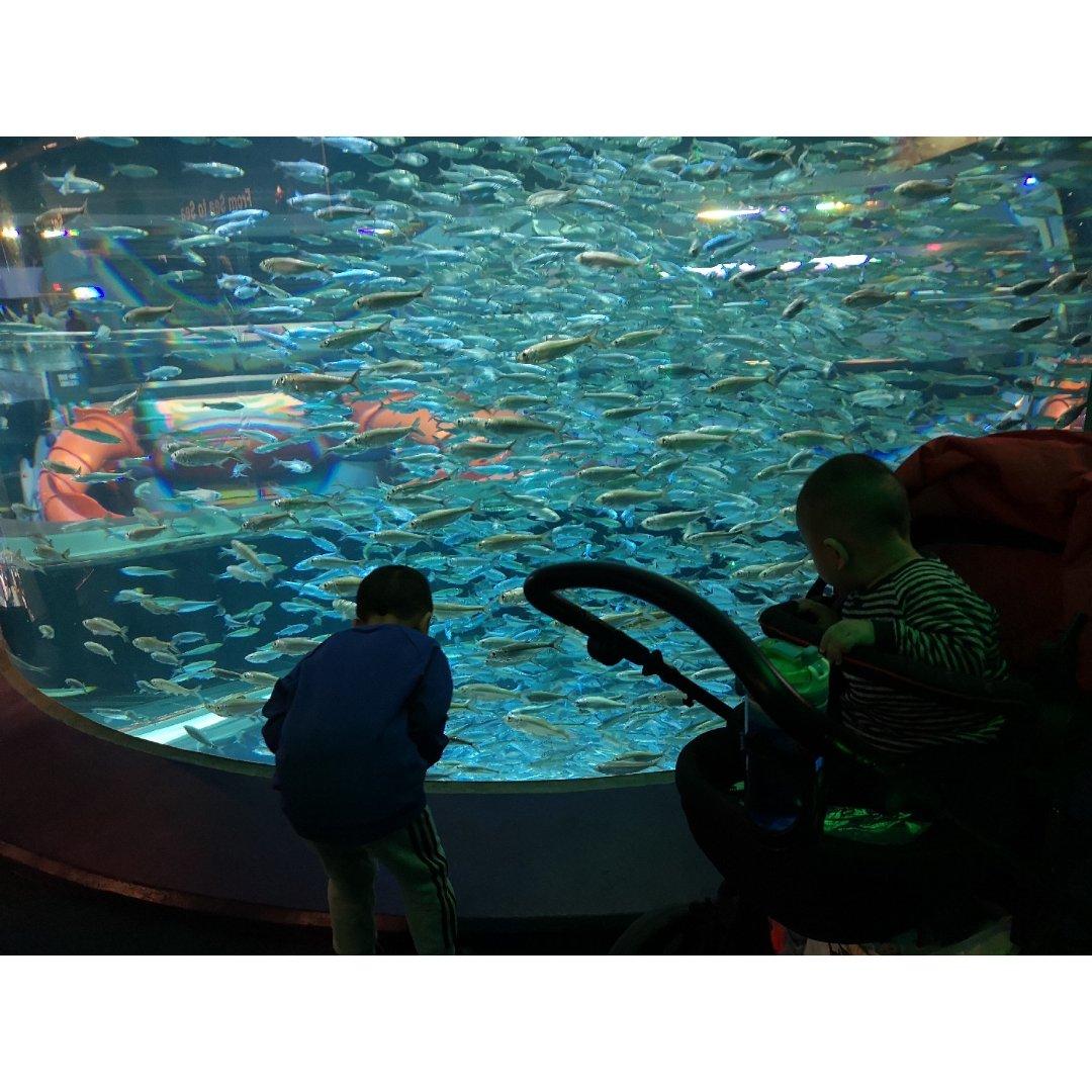 多伦多冬天遛娃👬打卡力普利水族馆🐟🐠🐚