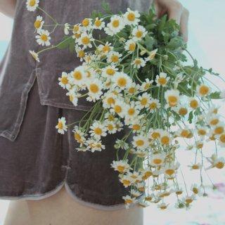 【微众测】雏菊·遇见Cloroom