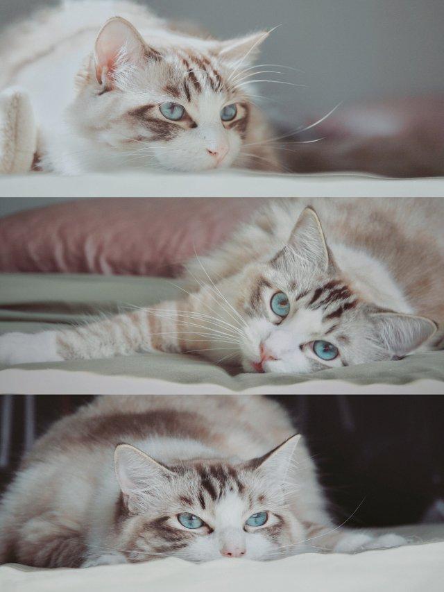 晒我家🐱猫主子,安利一个和猫主子表...