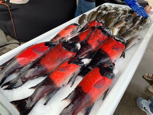 🐟 Fish Market