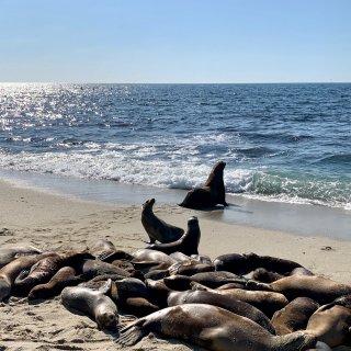 5⃣️说走就走的撸海豹之旅...