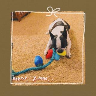 Bandit的圣诞礼物开箱🎁淘小子的玩具...