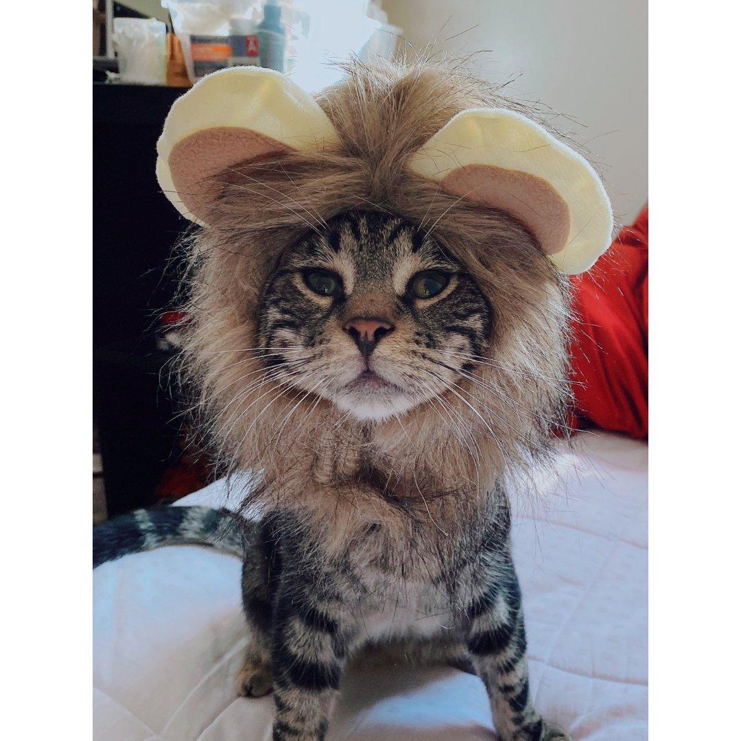 🦁️戴上狮子头~我就是Lion K...