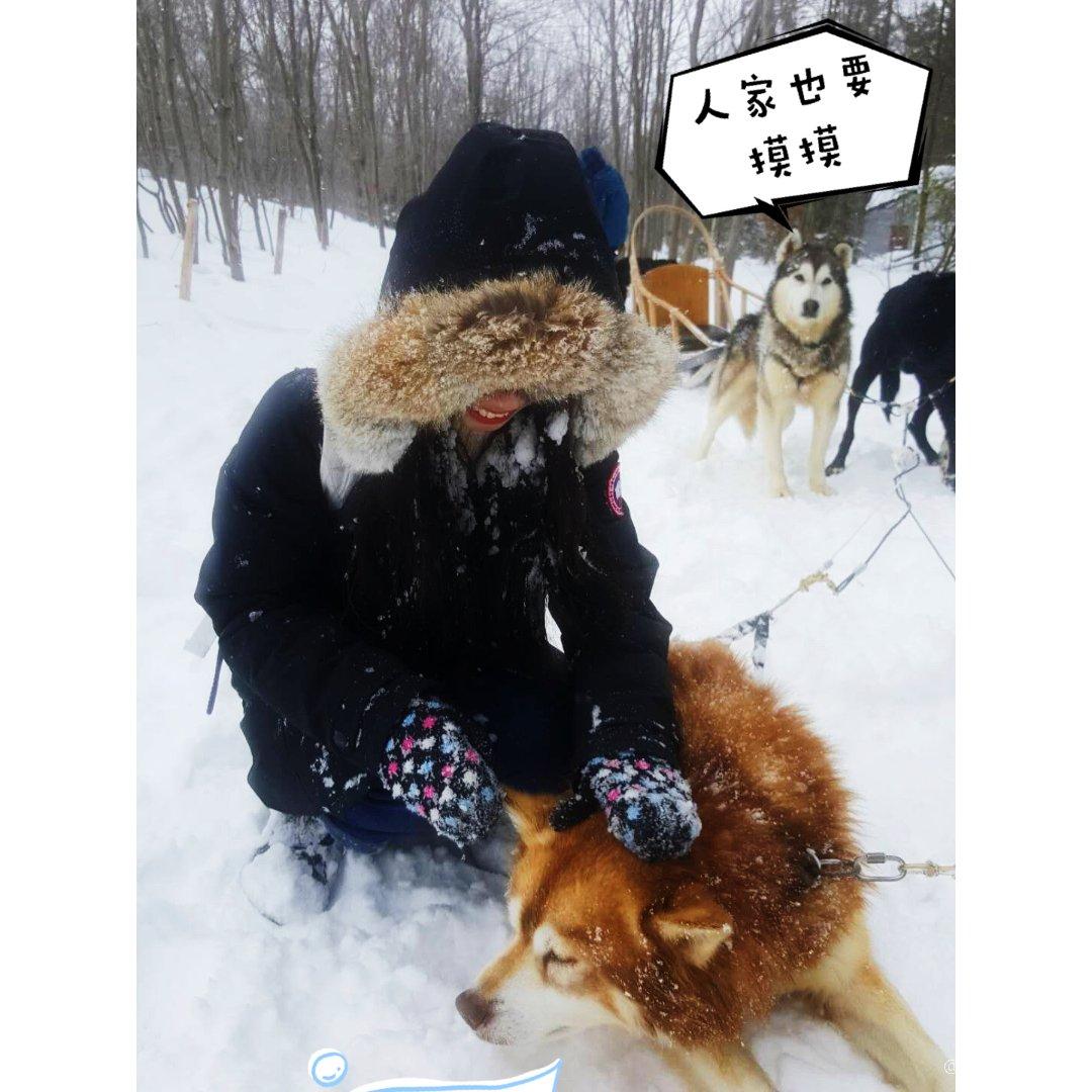 魁北克不知名莱维斯小镇❄️第一次玩雪橇犬...