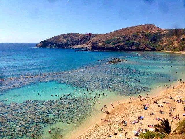 夏威夷恐龙湾浮潜|背景墙#8